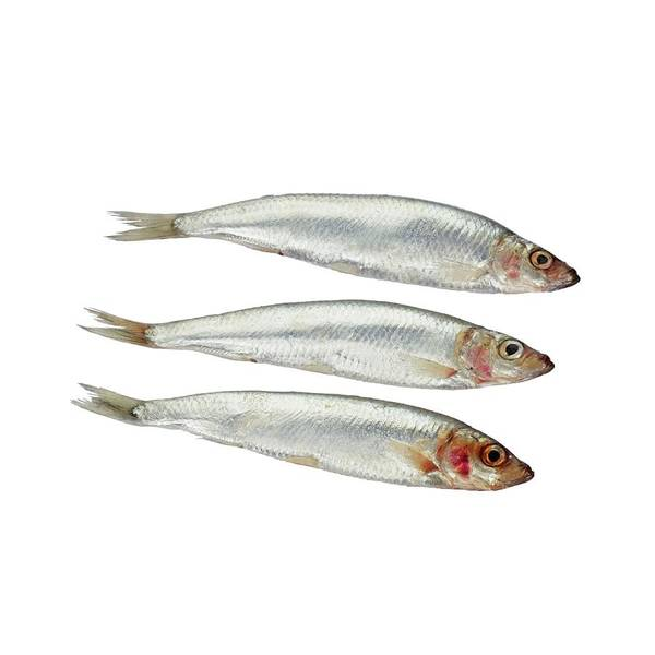 Cutout Wall Art - Photograph - Sprats by Geoff Kidd/science Photo Library