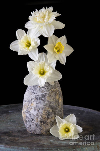 Flower Head Photograph - Spring Daffodils by Edward Fielding