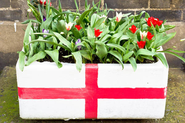 Trough Wall Art - Photograph - Spring Flowers by Tom Gowanlock