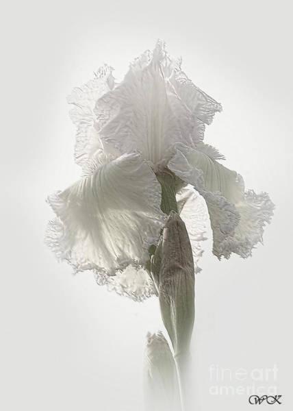 Photograph - Standing Tall by Wanda Krack