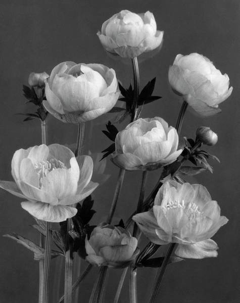 Photograph - Still Life Of Flowers by J. Horace McFarland