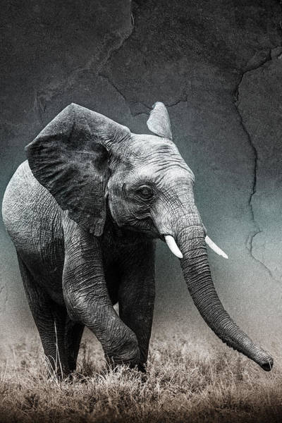 Rhinocerus Photograph - Stone Texture Elephant by Mike Gaudaur