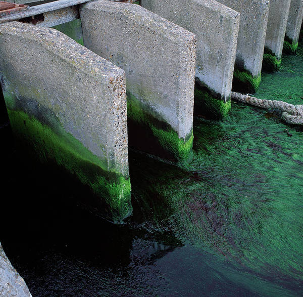 Drainage Photograph - Storm Drainage by Robert Brook/science Photo Library