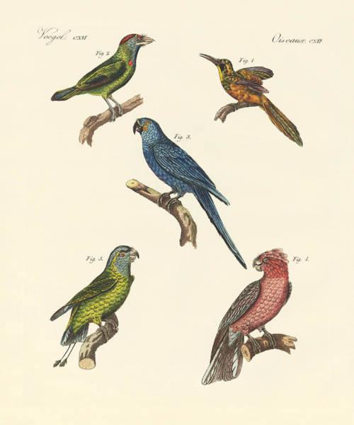 Blue Parrot Drawing - Strange Climbing Birds by Splendid Art Prints