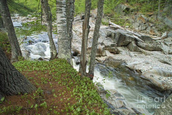 Photograph - Swift River by Alana Ranney