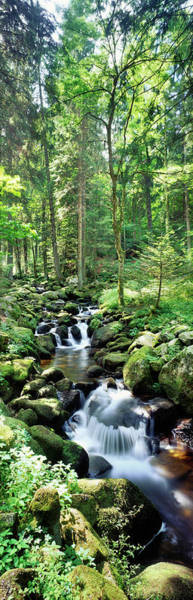 Wall Art - Photograph - Stream Flowing Through A Forest, Usa by Panoramic Images