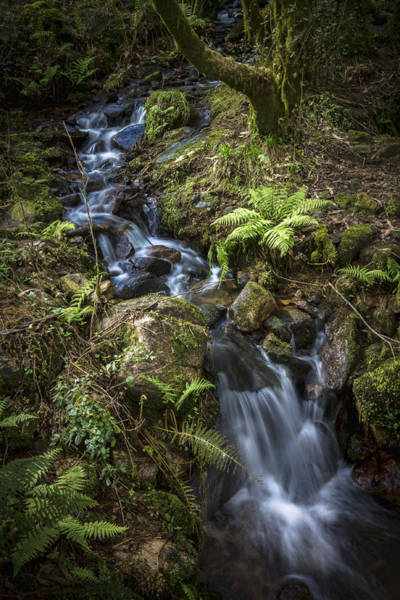 Photograph - Stream On Eume River Galicia Spain by Pablo Avanzini