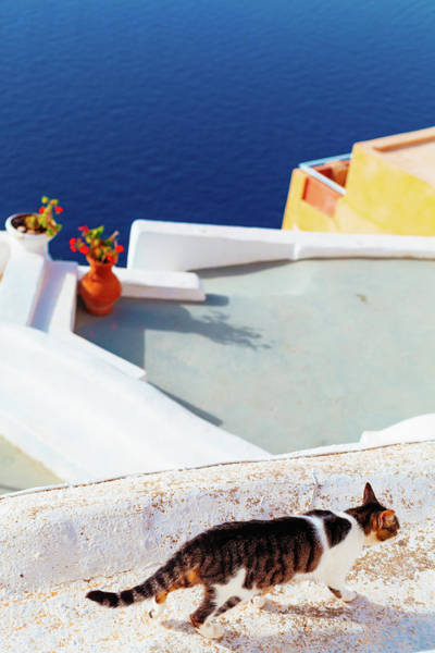 Photograph - Street Cat On The Wall In Mykonos by Deimagine