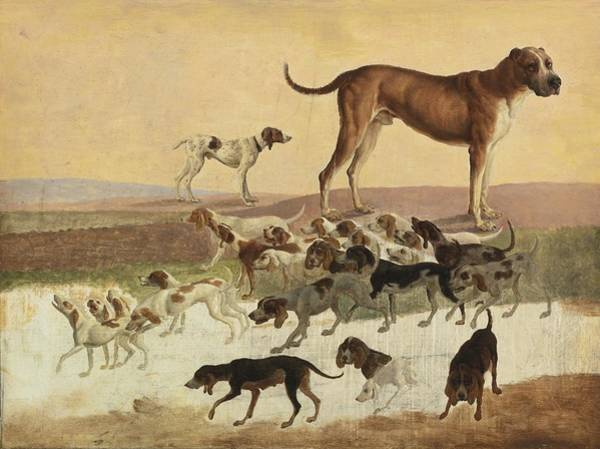 Painting - Study Of Dogs by Celestial Images
