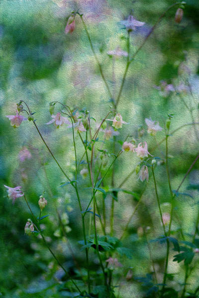 Oil Paint Photograph - Sublime by Rebecca Cozart
