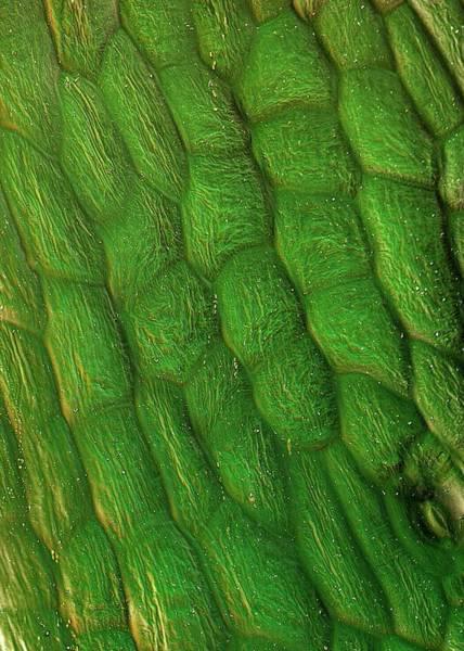 Sugar Beet Leaf Surface Art Print by Stefan Diller