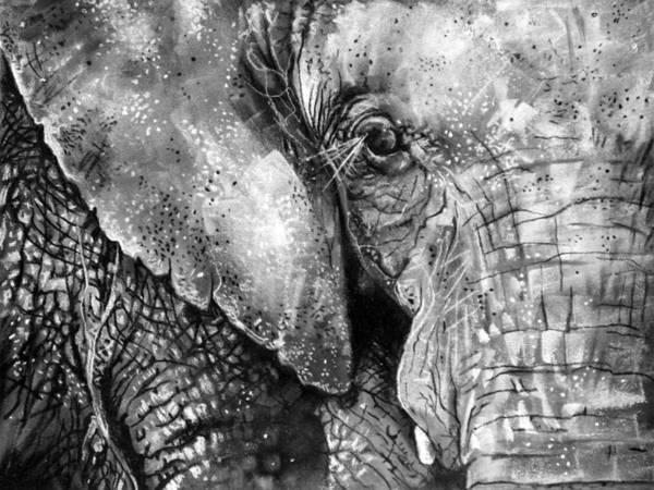 Sumatran Drawing - Sumatran Elephant by Sharlena Wood
