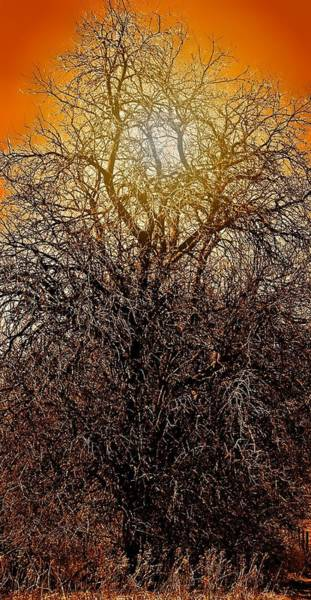 Photograph - Sunburst Tree  by Candice Trimble