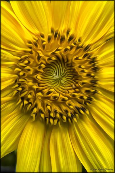 Photograph - Sunflower In Oil Paint by Erika Fawcett