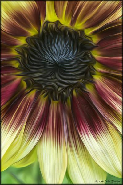 Photograph - Sunflower In Oils by Erika Fawcett