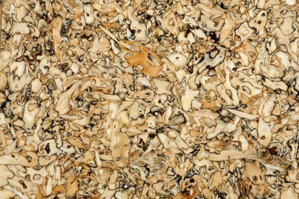 Sunflower Seeds Photograph - Sunflower Seed Board by Pascal Goetgheluck/science Photo Library