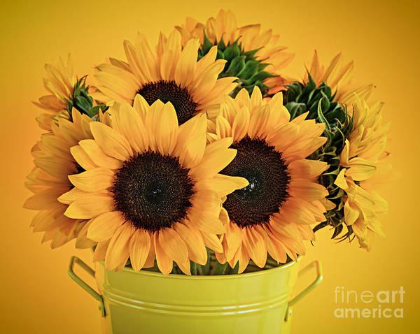 Metal Bucket Photograph - Sunflowers In Vase by Elena Elisseeva