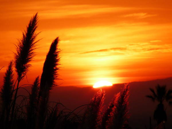 Photograph - Sunrise And Pampas by Jeff Lowe