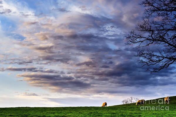 Photograph - Sunrise Grazing by Thomas R Fletcher