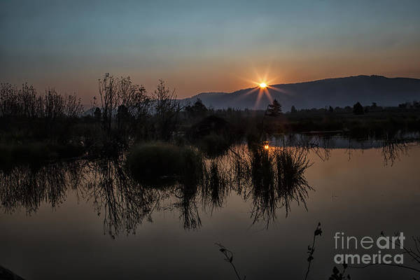 Photograph - Sunrise Over The Beaver Pond by Ronald Lutz