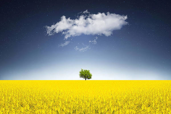 Field Photograph - Surreal Canola Field by Bess Hamiti