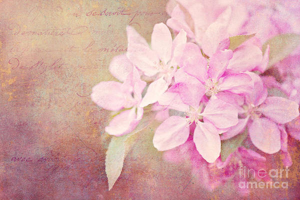Photograph - Sweet Memories by Beve Brown-Clark Photography