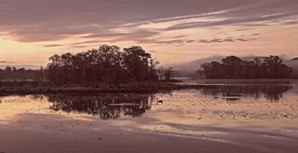 Photograph - Sweetly Mississippi by Leda Robertson