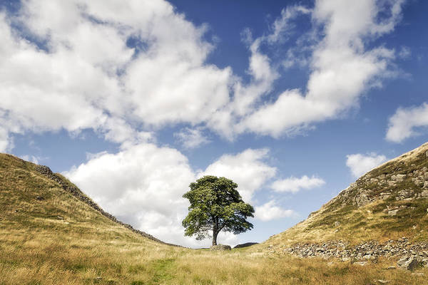 Hadrians Wall Photograph - Sycamore Gap Hadrian's Wall by Chris Frost