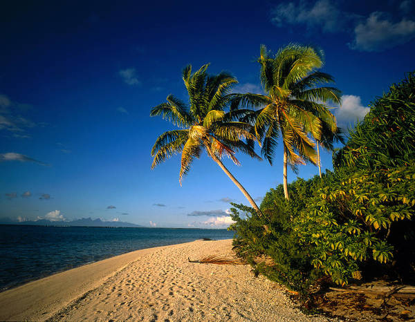 Respite Photograph - Tahiti French Polynesia by Panoramic Images