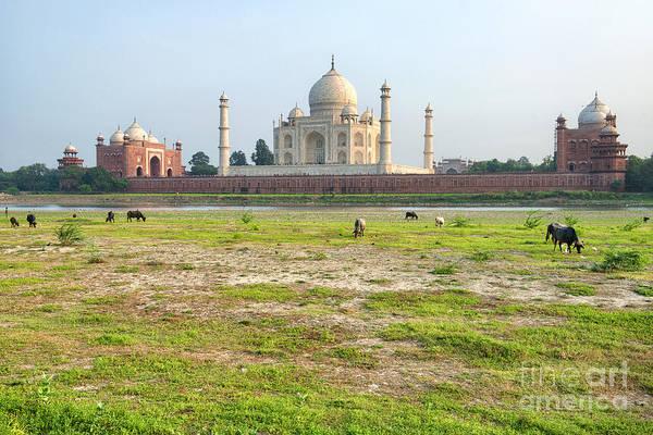 Photograph - Taj Mahal by Yew Kwang