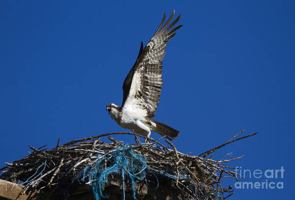 Wall Art - Photograph - Take-off by Mike  Dawson