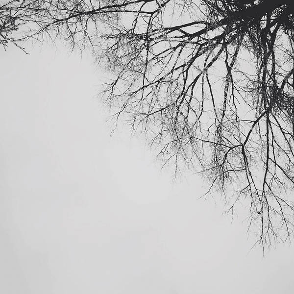 Photograph - Tangled by Natasha Marco