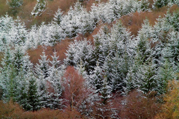 Icy Leaves Wall Art - Photograph - Tarset Valley In Winter by Simon Fraser/tarset Archive Group/science Photo Library