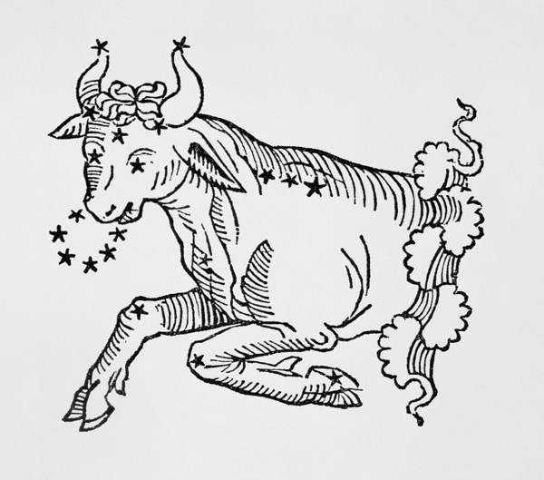 Snorting Wall Art - Drawing - Taurus  by Italian School