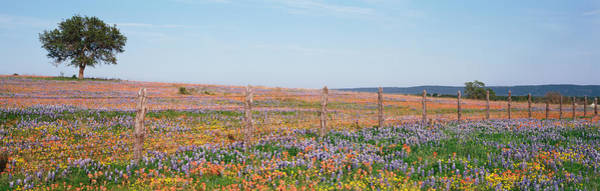 Wall Art - Photograph - Texas Bluebonnets And Indian by Panoramic Images