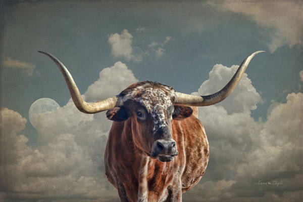Steer Photograph - Texas Longhorn by Karen Slagle
