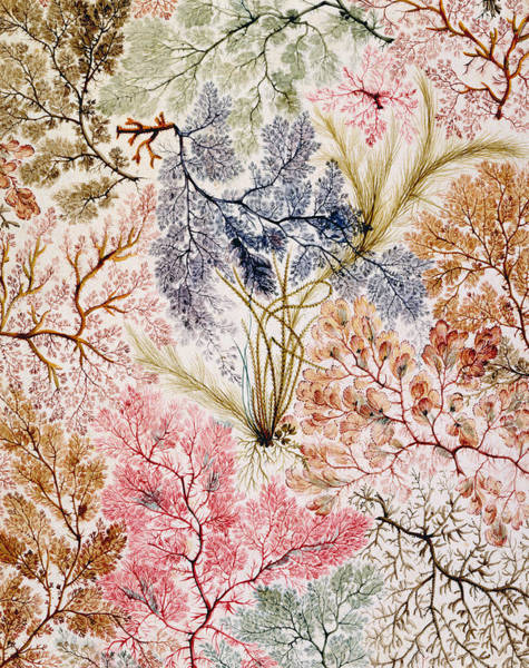 Weeds Painting - Textile Design by William Kilburn