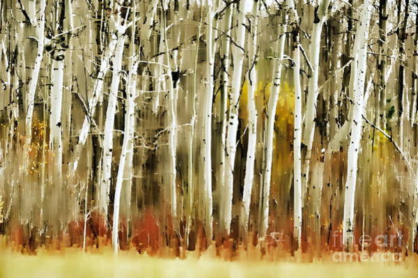 Art Print featuring the photograph The Birches by Andrea Kollo