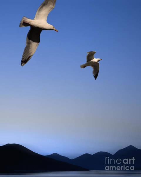Photograph - The Birds by Edmund Nagele