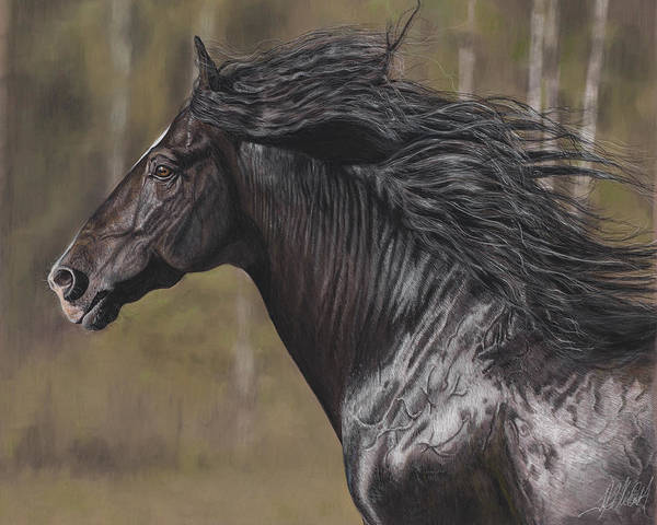 Painting - The Black Horse by Terry Kirkland Cook