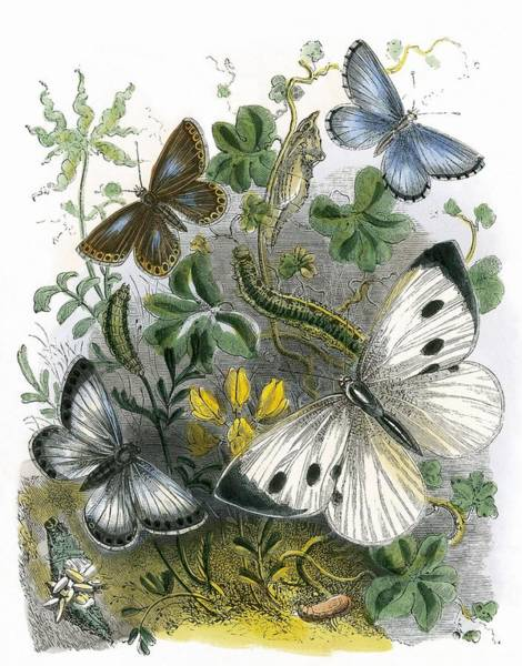 Butter Painting - The Butterfly Vivarium by English School