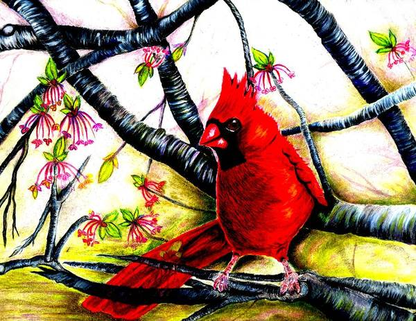 Red Cardinal Drawing - The Cardinal by Nancy Wagener