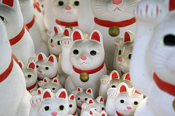 Photograph - The Cat Temple In Tokyo by For Ninety One Days