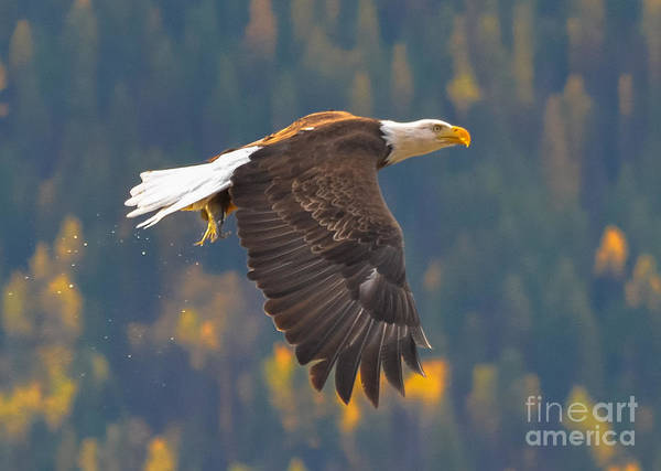 Nelson Bc Photograph - The Catch by Joy McAdams