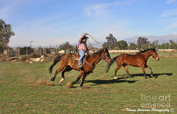 Norco Photograph - The Chase by Tommy Anderson