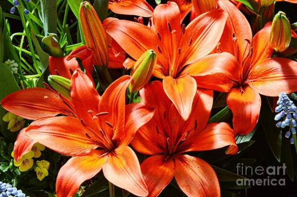 Tigerlily Wall Art - Photograph - The Color Orange by Kathleen Struckle