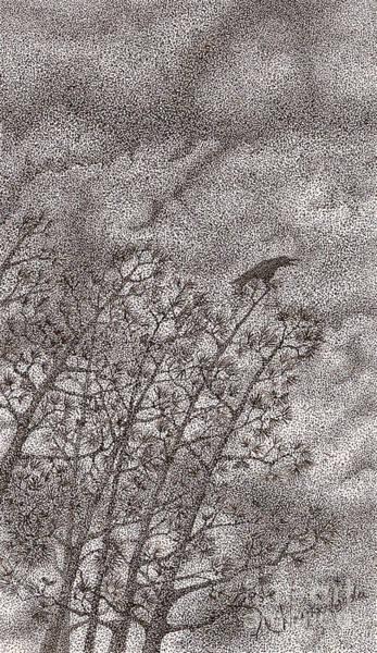 Avian Drawing - The Crow by Wayne Hardee