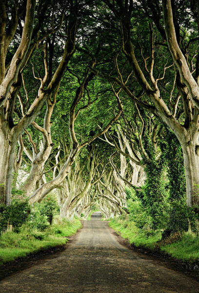 County Antrim Wall Art - Photograph - The Dark Hedges by Michelle Mcmahon