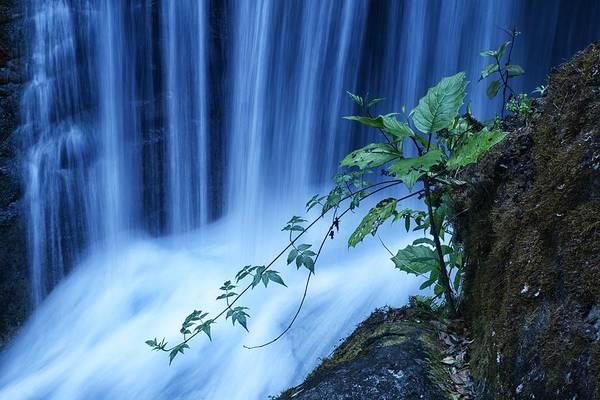 Trogon Photograph - The Falls by Christian Heeb