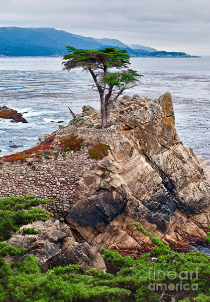 Monterey Cypress Photograph - The Famous Lone Cypress Tree At Pebble Beach In Monterey California by Jamie Pham